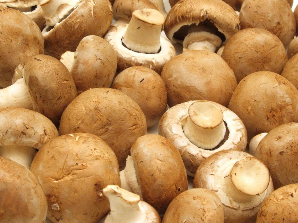 funghi champignon crema