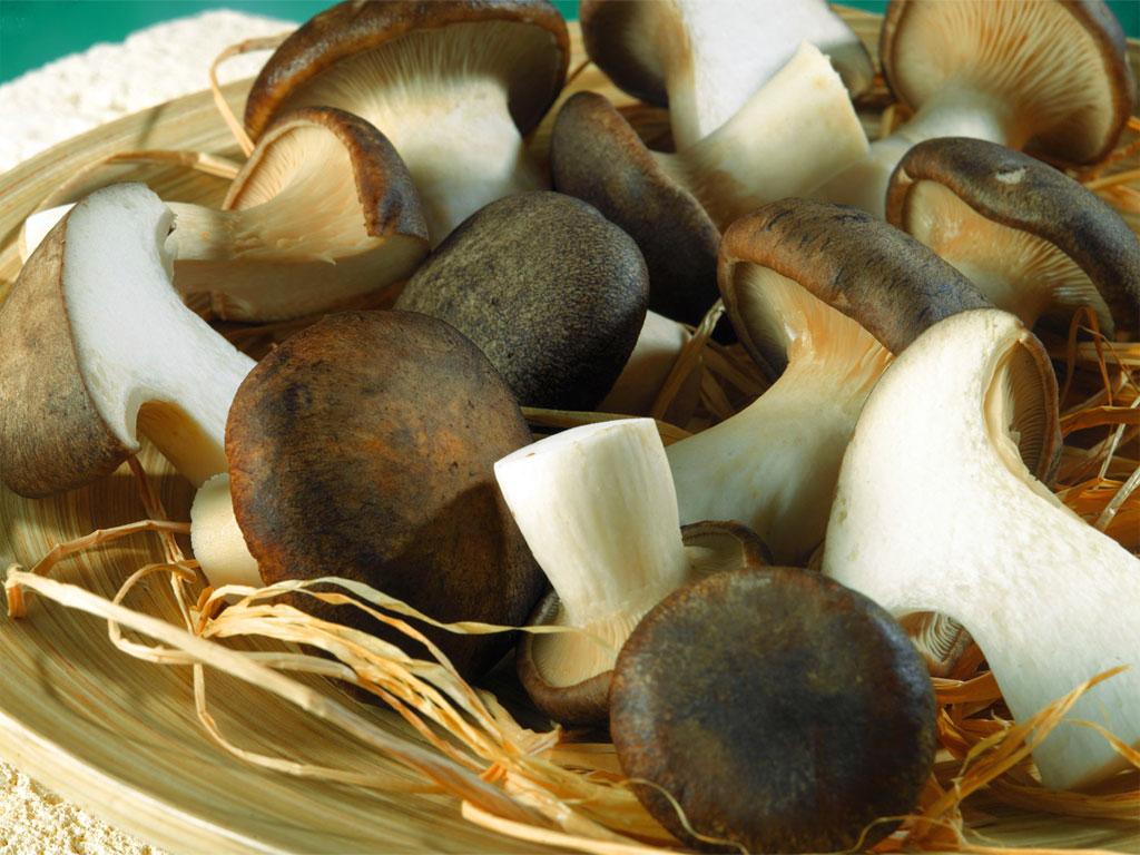 Ricette con funghi cardoncelli for Cucinare funghi