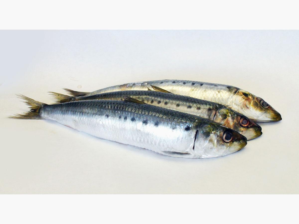 Involtini di sardine